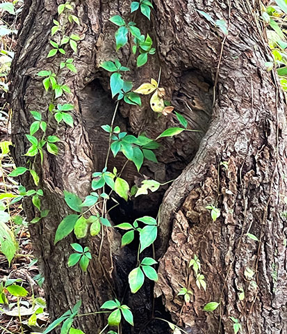 Heart in Tree by Kim Rice Whittemore