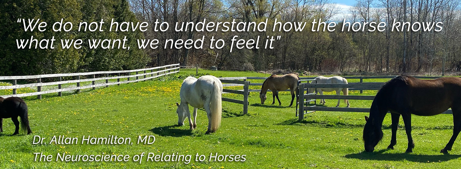 We do not need to understand how the horse knows what we want, we need to feel it. Dr. Allan Hamilton, MD, The Neuroscience of Relating to Horses.